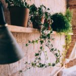 San Clemente Homes For Sale Gardening