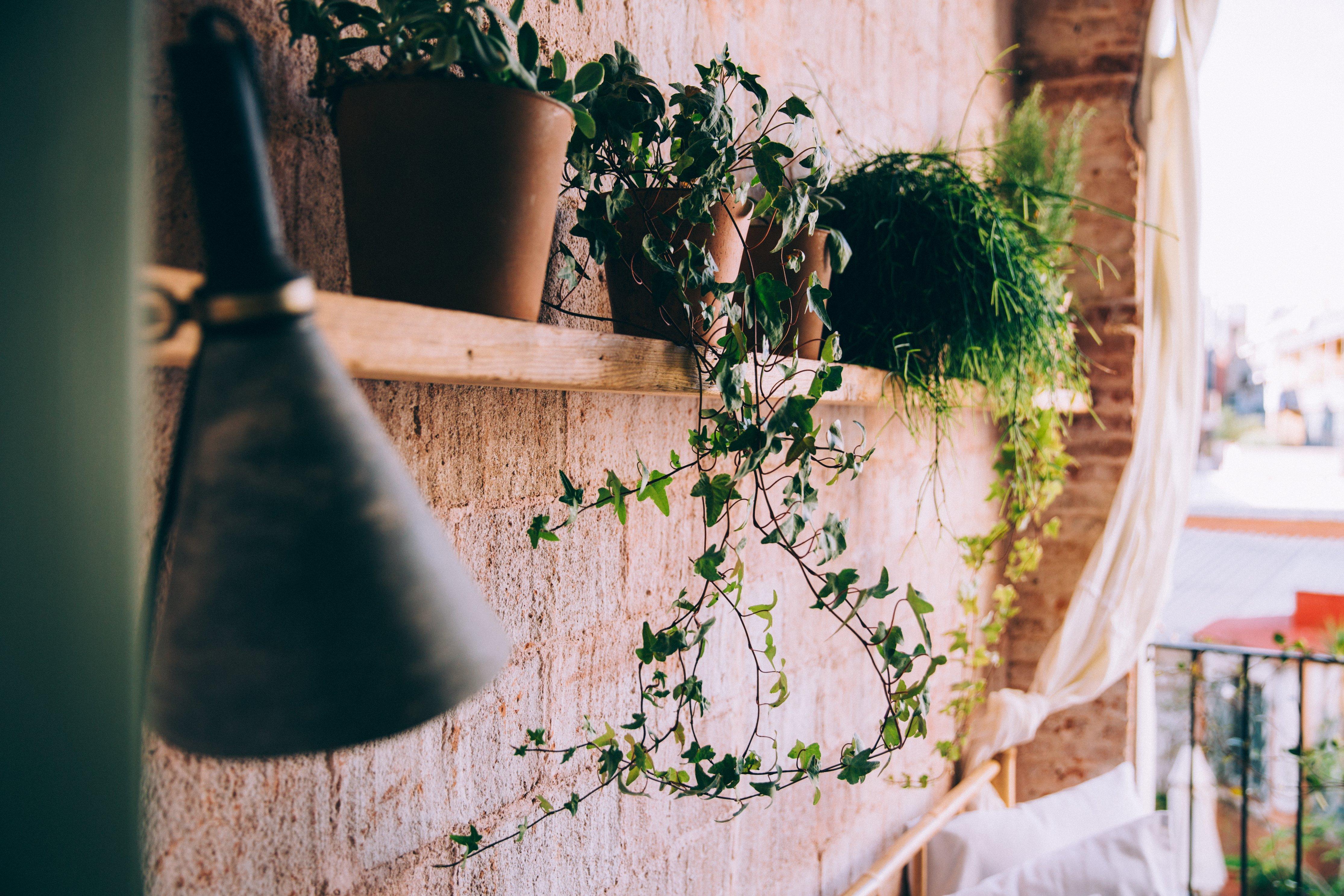 5 Pivotal Ways to Make Gardening Almost Effortless