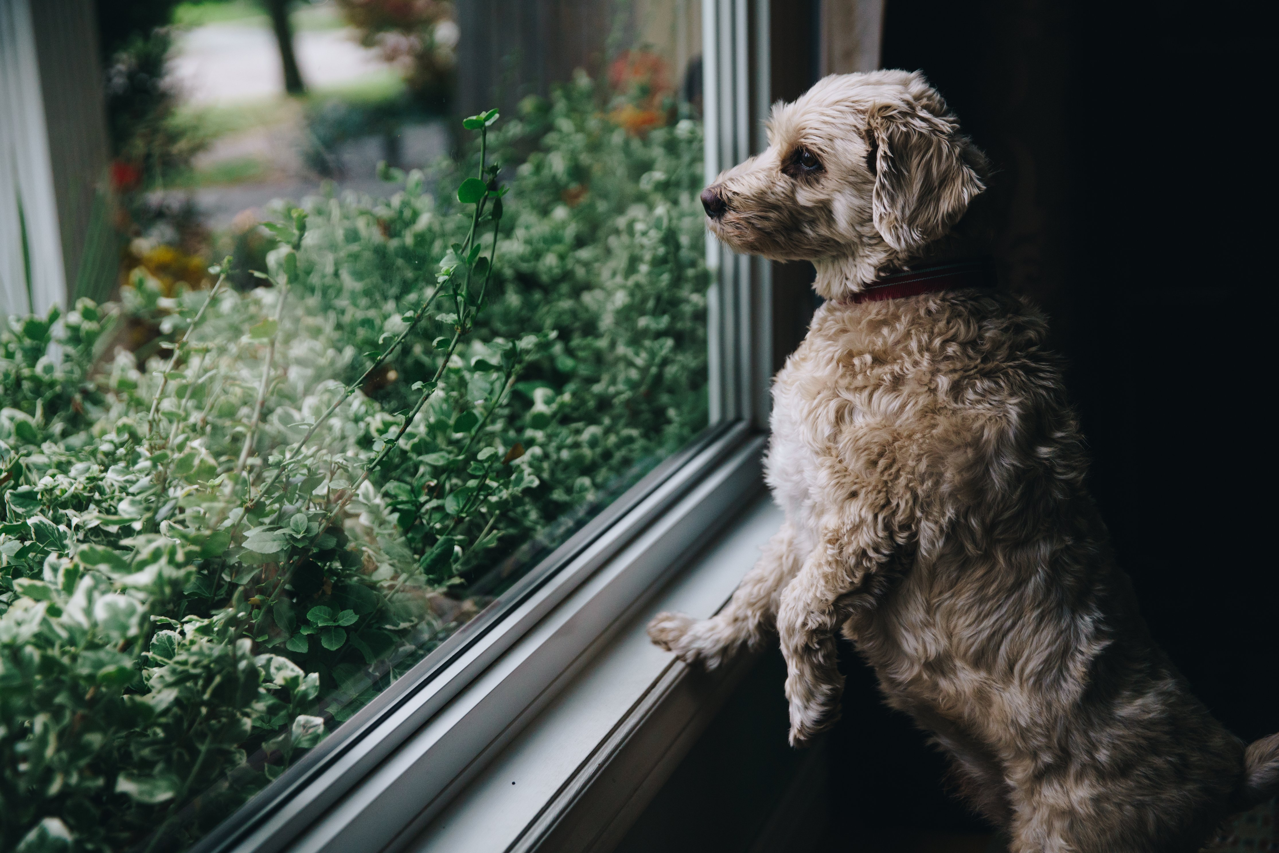 Is It Actually Worth Replacing Windows Prior To Selling A House?